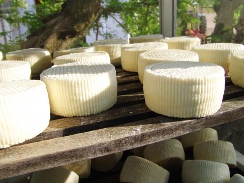 Masseria Signora, formaggi locali